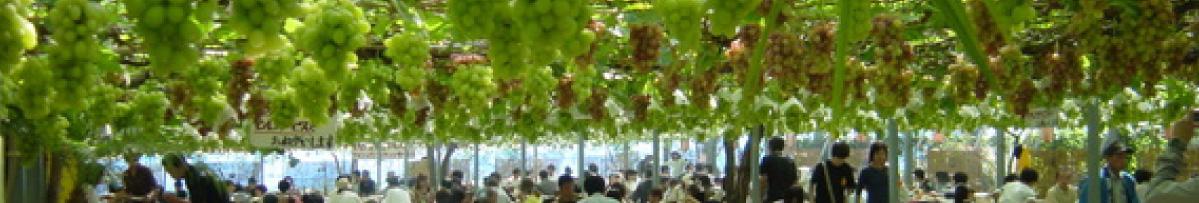 白根フルーツ王国は北辰金型工業所に程近い場所にあります。一年を通して新潟のフルーツをいつでも楽しめます。